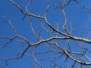 Branches On A Tree That Need Trimmed